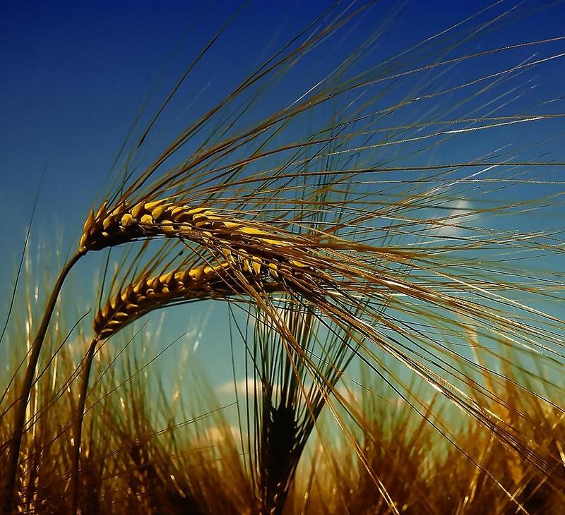 landwirtschaftskammerbremenlandwirtschaft-800x850px